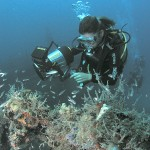 diver shipwreck and fish 150x150 St. Kitts Has A Lot To Offer