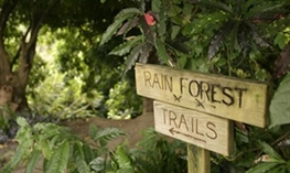 ottleys rainforest trail st. kitts St. Kitts Rainforest